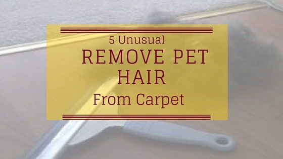 5 Unusual Ways to Remove Pet Hair from Carpet