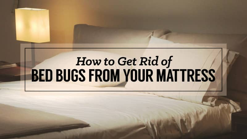How To Get Rid Of Bed Bugs From Your Mattress Updated