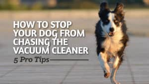 How-to-Stop-Your-Dog-from-Chasing-the-Vacuum-Cleaner-5-Pro-Tips