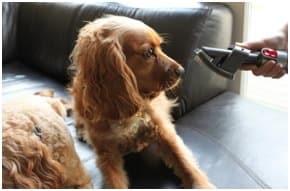 dog and vacuum