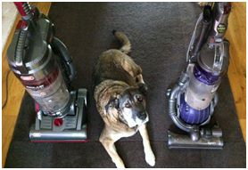 dog friends with vacuum