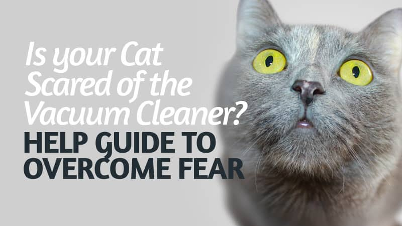 Is Your Cat Scared Of The Vacuum Cleaner Help Guide To