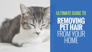 Ultimate-Guide-to-Removing-Pet-Hair-from-Your-Home