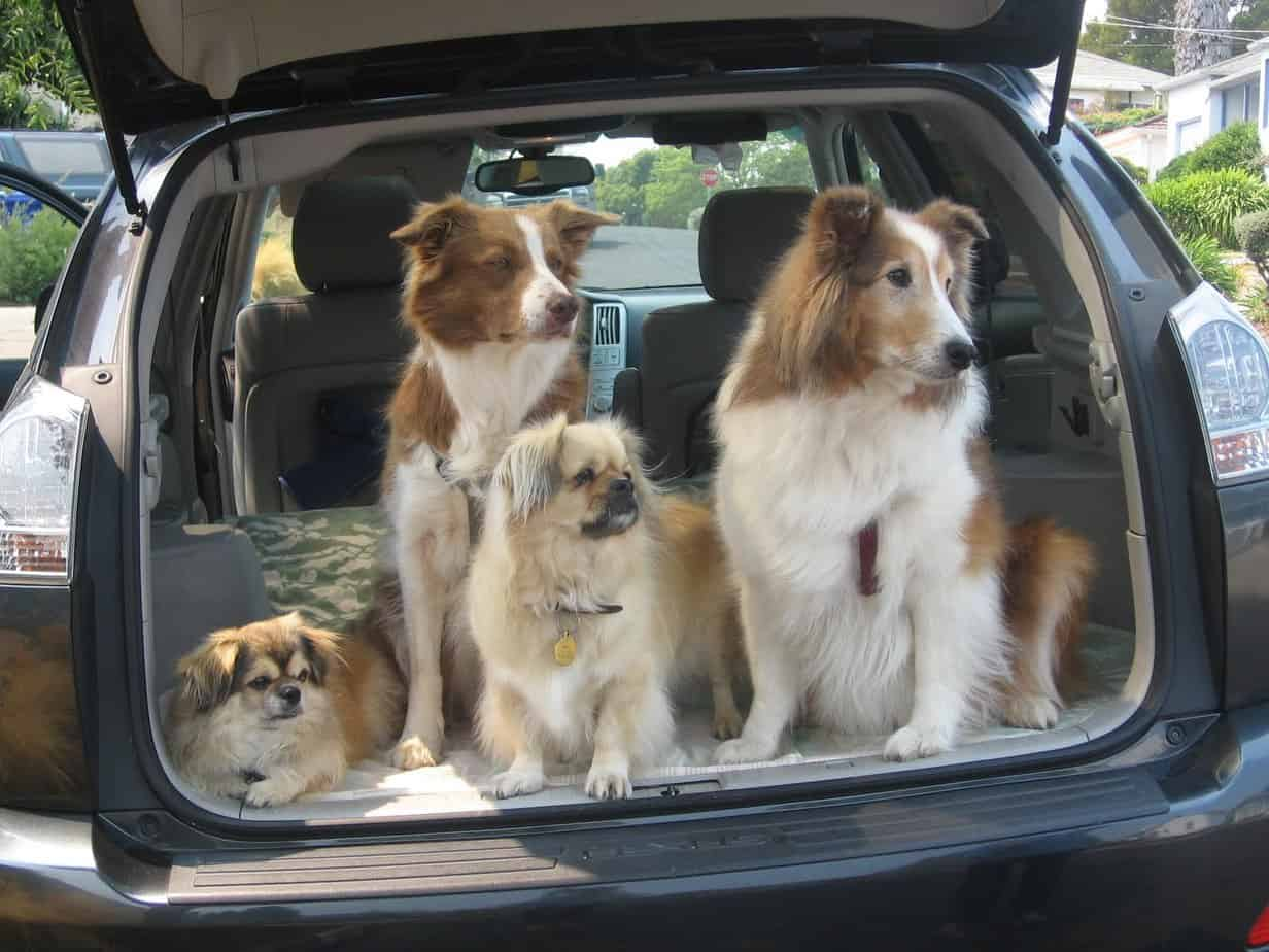 Pet Hair In Car