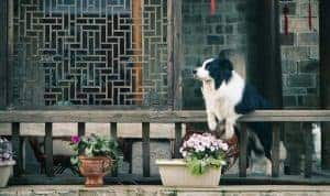 How to Get Rid Doggy Odours Around Your Home and Car