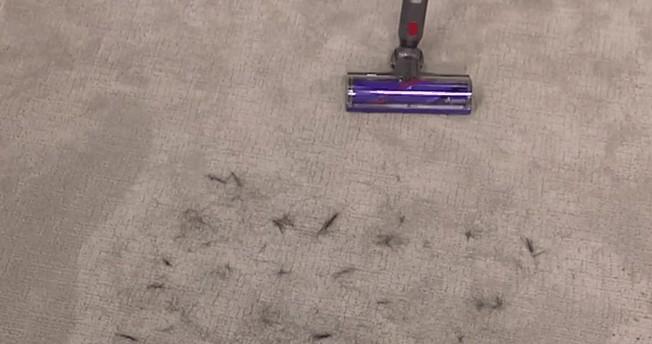 v10 animal for pet hair