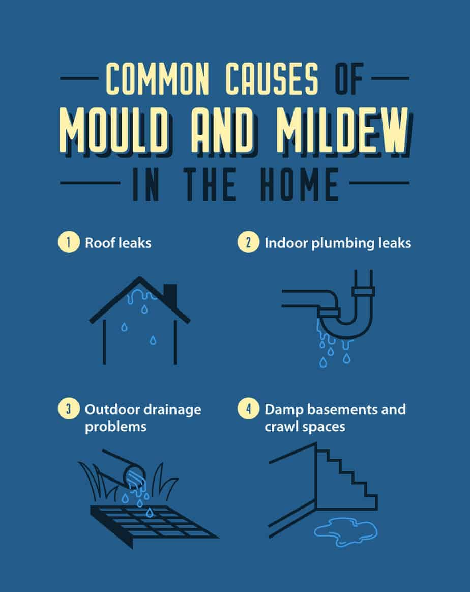 Common Causes of Mould and Mildew in the Home Infographic