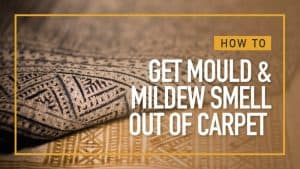 How to get Mould Smell Out of Carpet