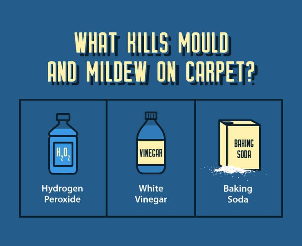 What Kills Mould and Mildew in Carpet Infographic