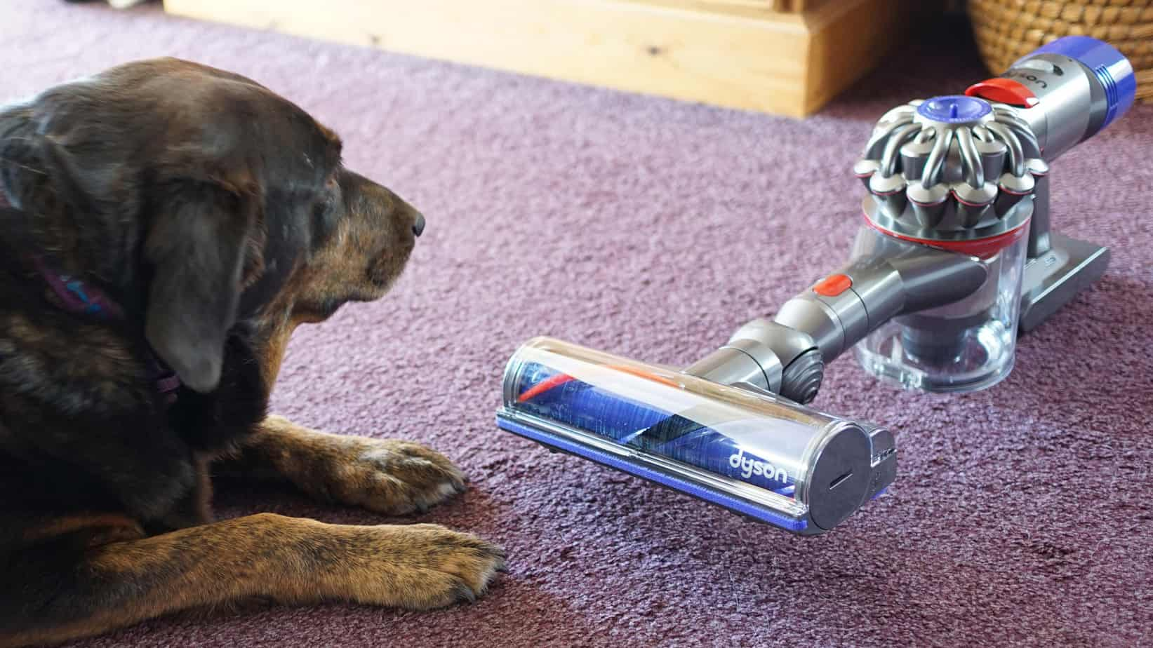 v8 Pet Hair cleaning