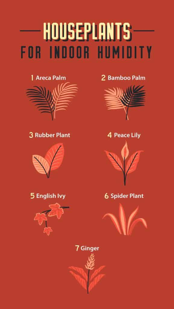 Houseplants-for-Indoor-Humidity