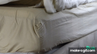 How_to_Get_Rid_of_Bed_Bugs_in_4_Easy_Steps