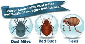 Kill Allergies and Dust Mites