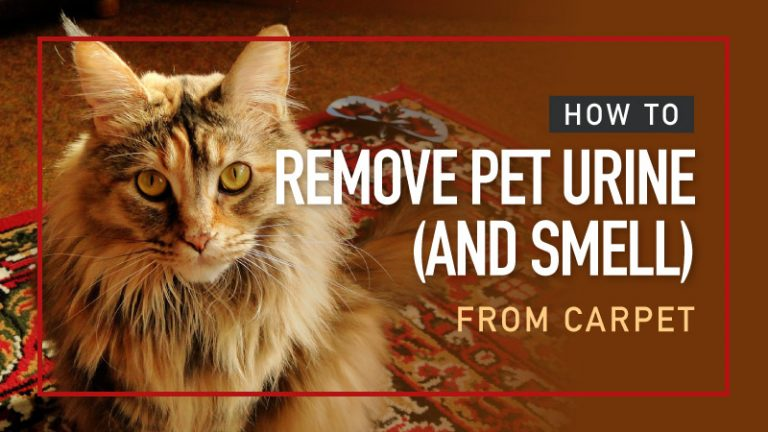 How-to-Remove-Pet-Urine-And-Smell-from-Carpet