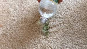 vinager on carpet to remove slime